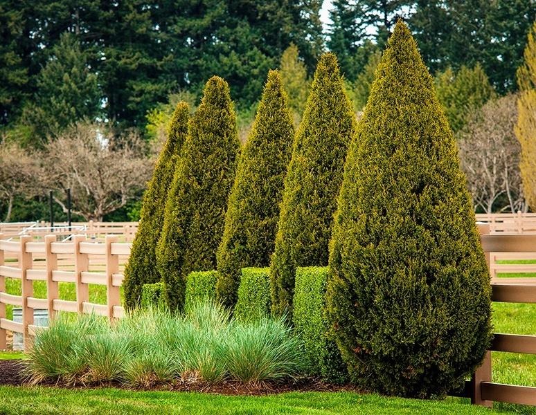 Çit bitkileri nelerdir ve avantajları nedir?